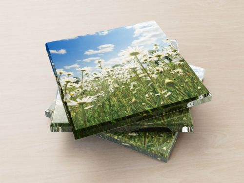 Ox Eye Daisies II - Glass Coasters
